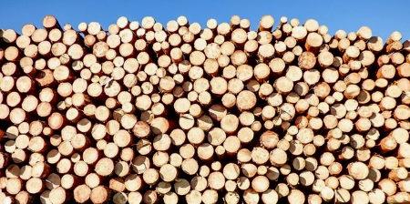 Diófa tűzifa árak